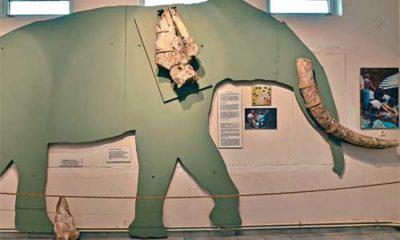 Μουσείο Απολιθωμάτων Θηλαστικών Κερασιάς